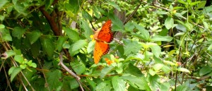 40_mariposa_800