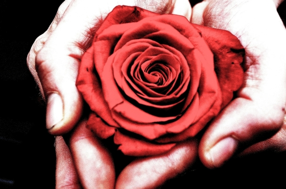 hands with rose
