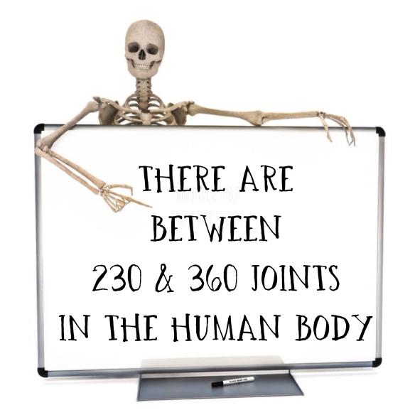 skelton joint2